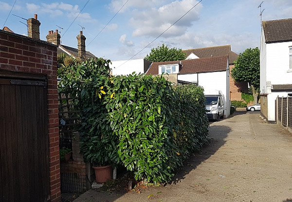 Southsea - clearance and cut back to overgrown areas
